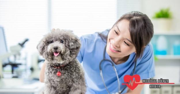 Kadın veteriner hekimlerine STEM yetkinlikleri ile destek