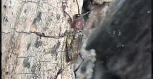 Eyüpsultan'da tehlikeli böcek! Belediye ekipleri alarmda